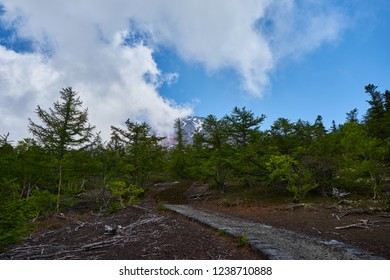 look onto mount fujiyama from the foot of the mountain with a forest in front of it and a blue cloudy sky and some haze comming up the mountain from the left