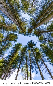 look up to the sky in a forest