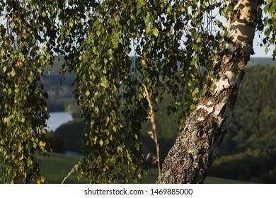 look through trees to the eifel rursee