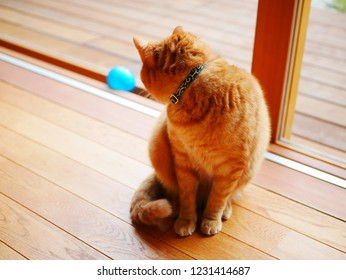 Look at the toy red tabby cat