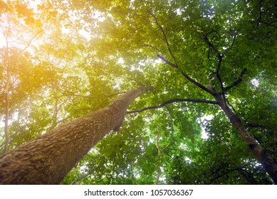Look up under the trees with sunlight in tropical rain forest - Low angle view