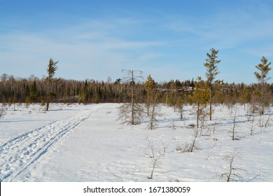 Looking Across a Bog in the Winter - International Falls, Minnesota. Sunny Day.