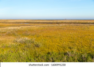 Looking across the grasslands of Galveston State Park at Viewing Tower and Galveston Bay in BG