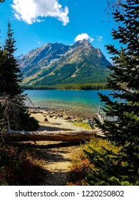 Looking across Leigh Lake in Grand Teton NP in Wyoming, from the Leigh Lake Trail, one has a beautiful view of the Tetons. Logs and evergreens hug the shoreline on the forest floor.