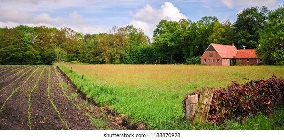 Looking across the lush fields towards an old barn near Delden in the region of Twente (Overijssel, The Netherlands). Only a couple days later this barn demolished. This region has a lot of these land