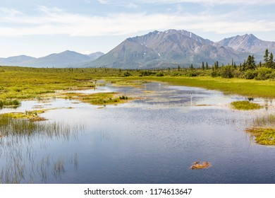 Looking across rich and vibrant wetlands on a perfect summer day to a family of waterfowl and out towards the Clearwater Mountains from the iconic Denali Highway. Alaska.