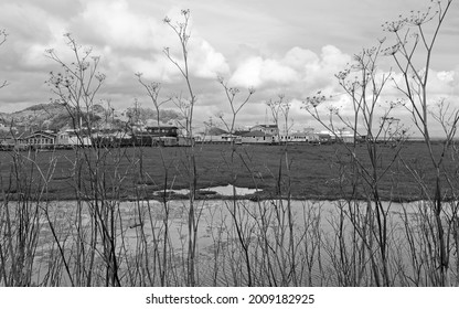 Looking across wetlands to a group of houseboats off a boardwalk. Black and white.