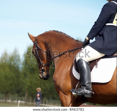 Looking along the shoulder of a dressage horse