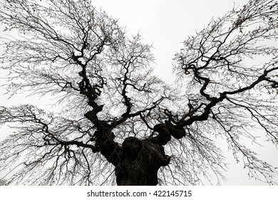 Looking up at a bare, spooky looking tree. There are no leaves. The tree appears to be reaching out over you and trying to grab or chase you. The sky is bright but cloudy.