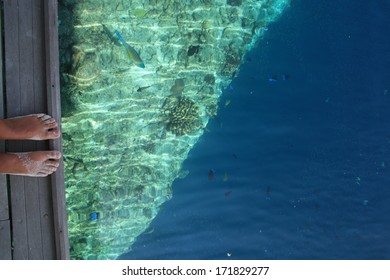 looking at the barrier reef