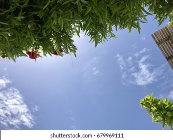 Looking up at a blue sky