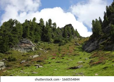 looking up  by Zirbenweg trail , Patscherkofel mountain