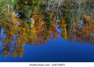 Looking at a calm body of water with a reflection of trees in full fall color.