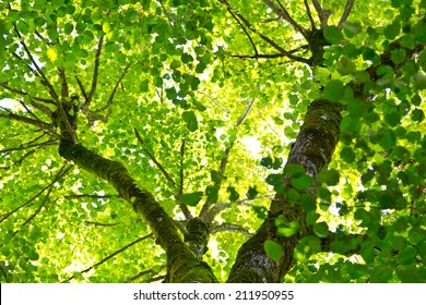 Looking up at a canopy of green leaves in the French countryside.