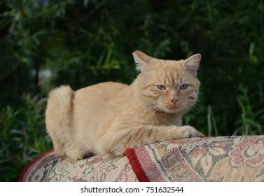 Looking cat.