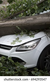 Looking at a damaged car caused by the fall of a large tree
