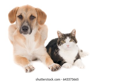 Looking dog and cat, sitting side by side, against a white background