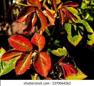 Looking down at a close-up of red and green leaves
