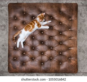 Looking down at cute red kitten sleeping on a luxurious buttoned leather ottoman