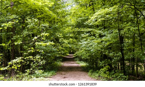 Looking down a forest trail that disappears in the distance with oak, maple, and birch creating a beautiful green canopy over the earthen path.