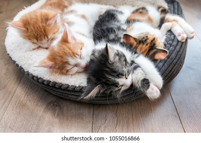 Looking down at four fluffy kittens sleeping in a white bed
