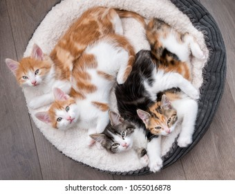 Looking down at four fluffy kittens in a white bed