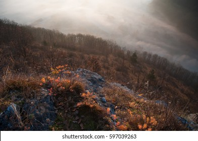 Looking down to the misty woods from the top of the mountain