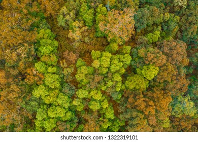Looking down at native Australian trees - aerial view