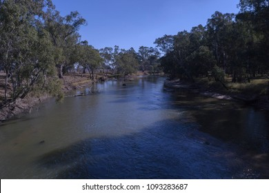 looking down on a flower river with eucalptus trees on the banks and clear blue sky and a sunny day