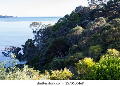 Looking down onto native NZ bush in deep shade with the beautiful blue sea of Sandy Bay, Northland. Can see cabbage trees, pohutukawa, Kanuka among others. Just after sunrise high tide. Sunny kiwi day