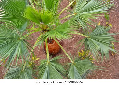 looking down onto a young palm tree