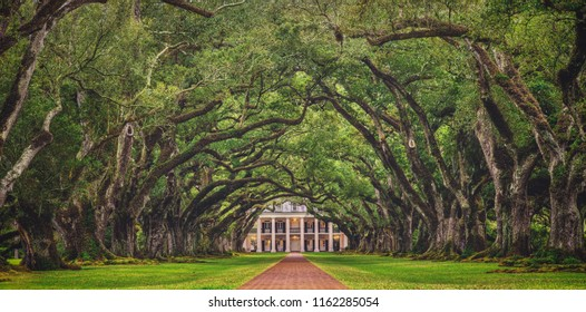 Looking down the tree tunnel of the infamous Oak Alley Plantation in Vacherie, Louisiana, arguably one of the best preserved and most stunning plantations of the antebellum south.