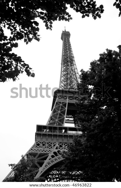 Looking to Eiffel Tower through the leaves of a tree, Paris, France (black and white photo)