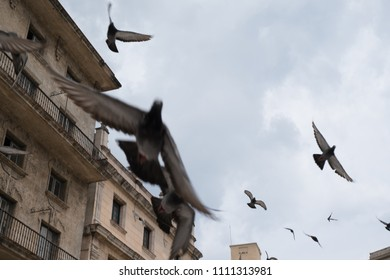 Looking up as a flock of pigeons fly through the air in the Plaza of San Francisco in Old Town Havana, Cuba, also known as Pigeon Square. Pigeons flying towards the camera.