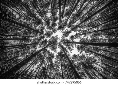 looking up at the forrest in winter