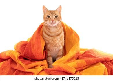 Un gato envuelto en una tela naranja y amarilla. En blanco.