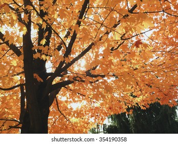 Looking into the colorful branches of a tree on an sunny autumn afternoon