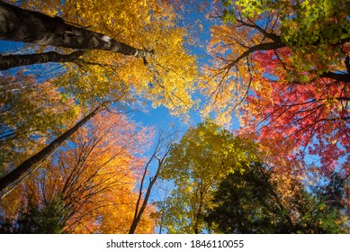 Looking up into peak fall color