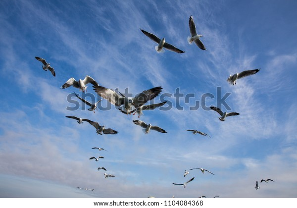 Looking up into the sky and seeing local birds flying aside our boats, at Inle Lake, Myanmar