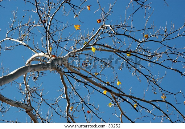 Looking up at the Last leaves.
