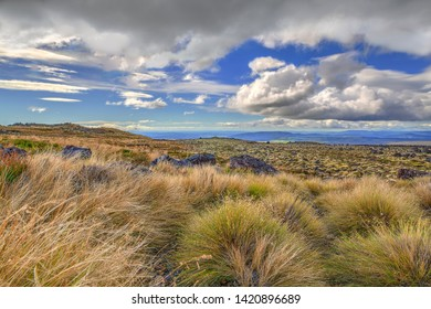 Looking north from below the summit of Mt Ruapehu over New Zealand sub-alpine Tussock-scape featuring endemic evergreen snow tussock and other low sparse vegetation.