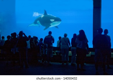 looking at the orca