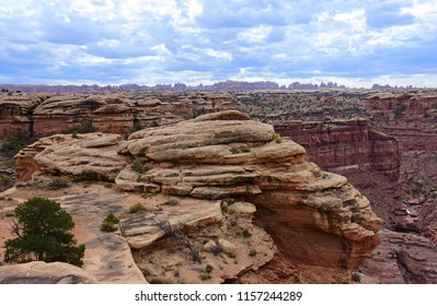 looking out across spring canyon  to the dramatically eroded needles rock formations along the slickrock foot trail in the needles district of canyonlands national park, near moab, utah