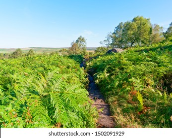 Looking out over a bracken covered hillside, dotted with trees, to the distant Derbyshire moors
