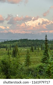Looking out over Wonder Lake campground as the sun sets bathing Mount McKinley is the pinks and golds of a stunning alpine glow. Denali National Park, Alaska.