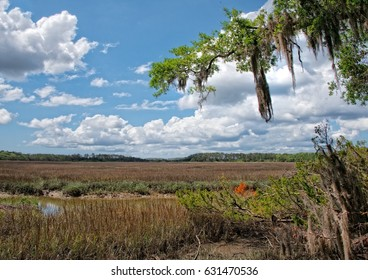 Looking over a marsh with blue sky and clouds with Spanish moss on a tree