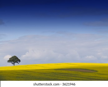 looking over a rural english landscape to a lone tree