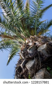 looking up to a palm tree