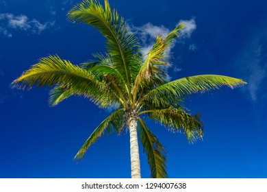 Looking up at a palm tree against a blue sky