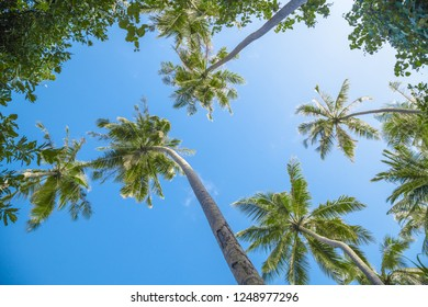 Looking up to the palm trees